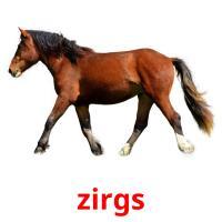 zirgs карточки энциклопедических знаний