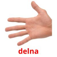 delna picture flashcards
