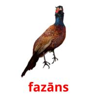 fazāns picture flashcards
