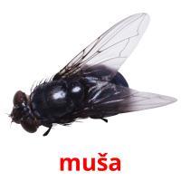 muša picture flashcards