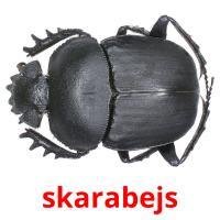 skarabejs picture flashcards