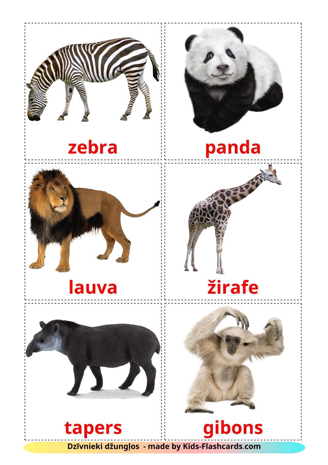 Jungle animals - 21 Free Printable latvian Flashcards