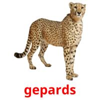 gepards picture flashcards