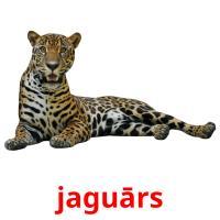 jaguārs picture flashcards