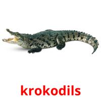krokodils picture flashcards
