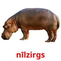nīlzirgs picture flashcards