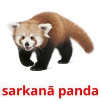 sarkanā panda picture flashcards