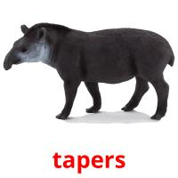 tapers picture flashcards