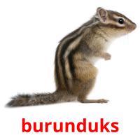 burunduks picture flashcards