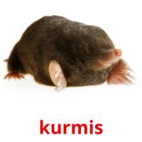 kurmis picture flashcards