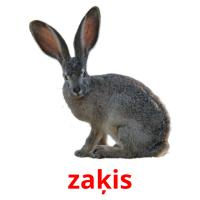 zaķis picture flashcards