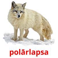 polārlapsa picture flashcards