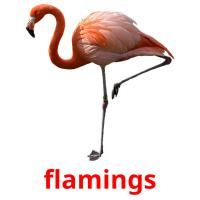 flamings picture flashcards