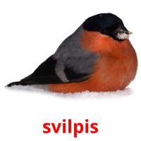 svilpis picture flashcards