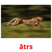 ātrs picture flashcards