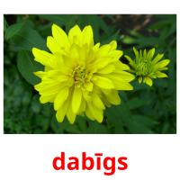 dabīgs picture flashcards