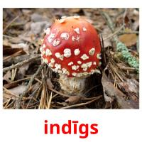 indīgs picture flashcards