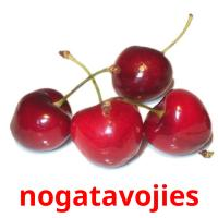 nogatavojies picture flashcards