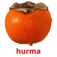 hurma picture flashcards