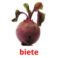 biete picture flashcards