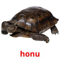 honu picture flashcards