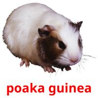 poaka guinea picture flashcards