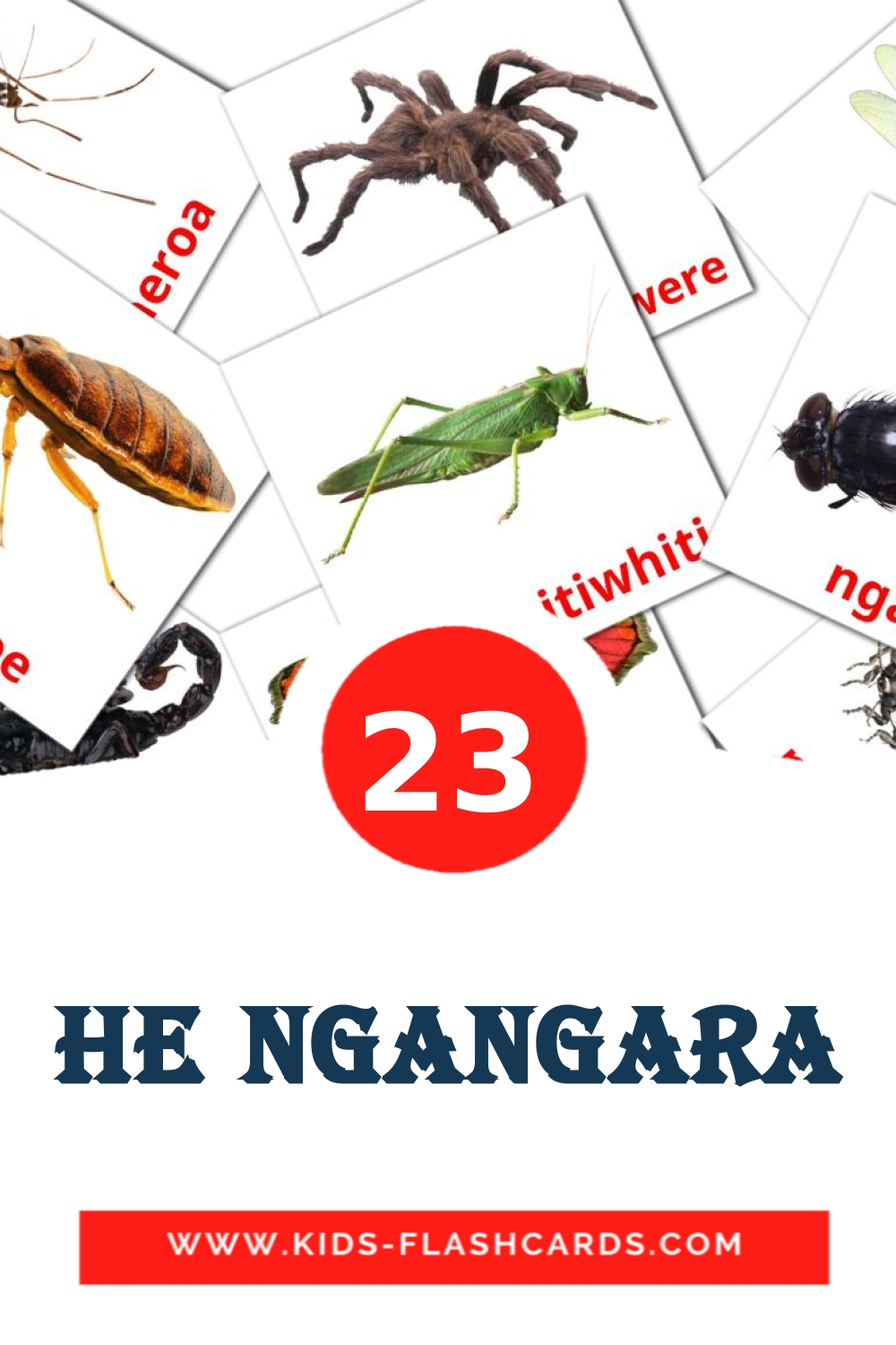 23 He Ngangara Picture Cards for Kindergarden in maori