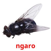 ngaro picture flashcards