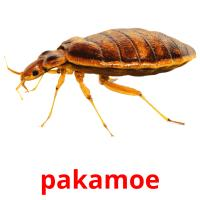 pakamoe picture flashcards