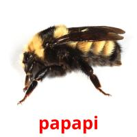 papapi picture flashcards
