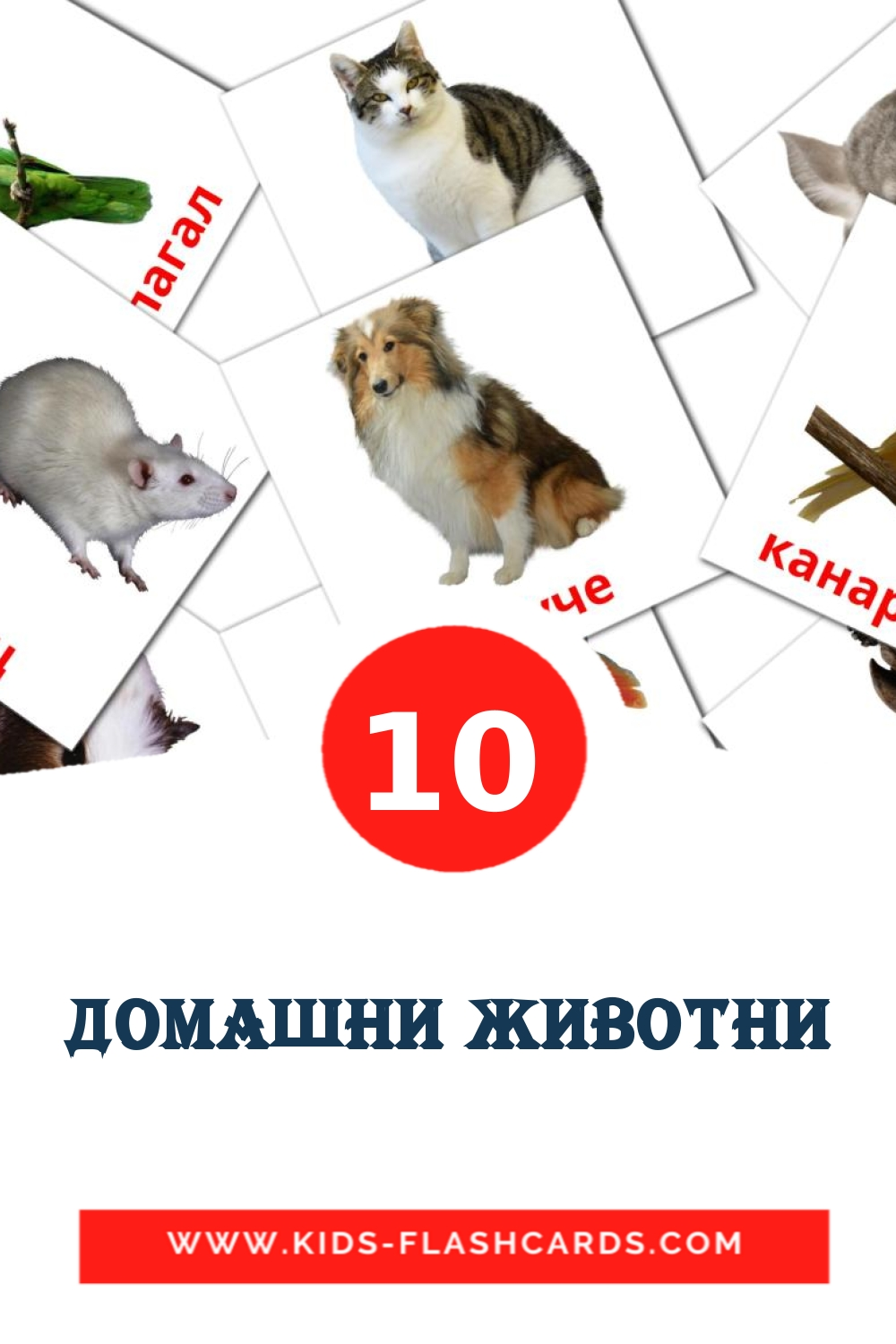 10 Домашни животни Picture Cards for Kindergarden in macedonian