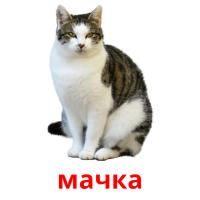 мачка picture flashcards