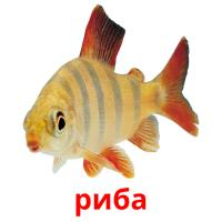риба picture flashcards