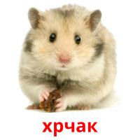 хрчак picture flashcards