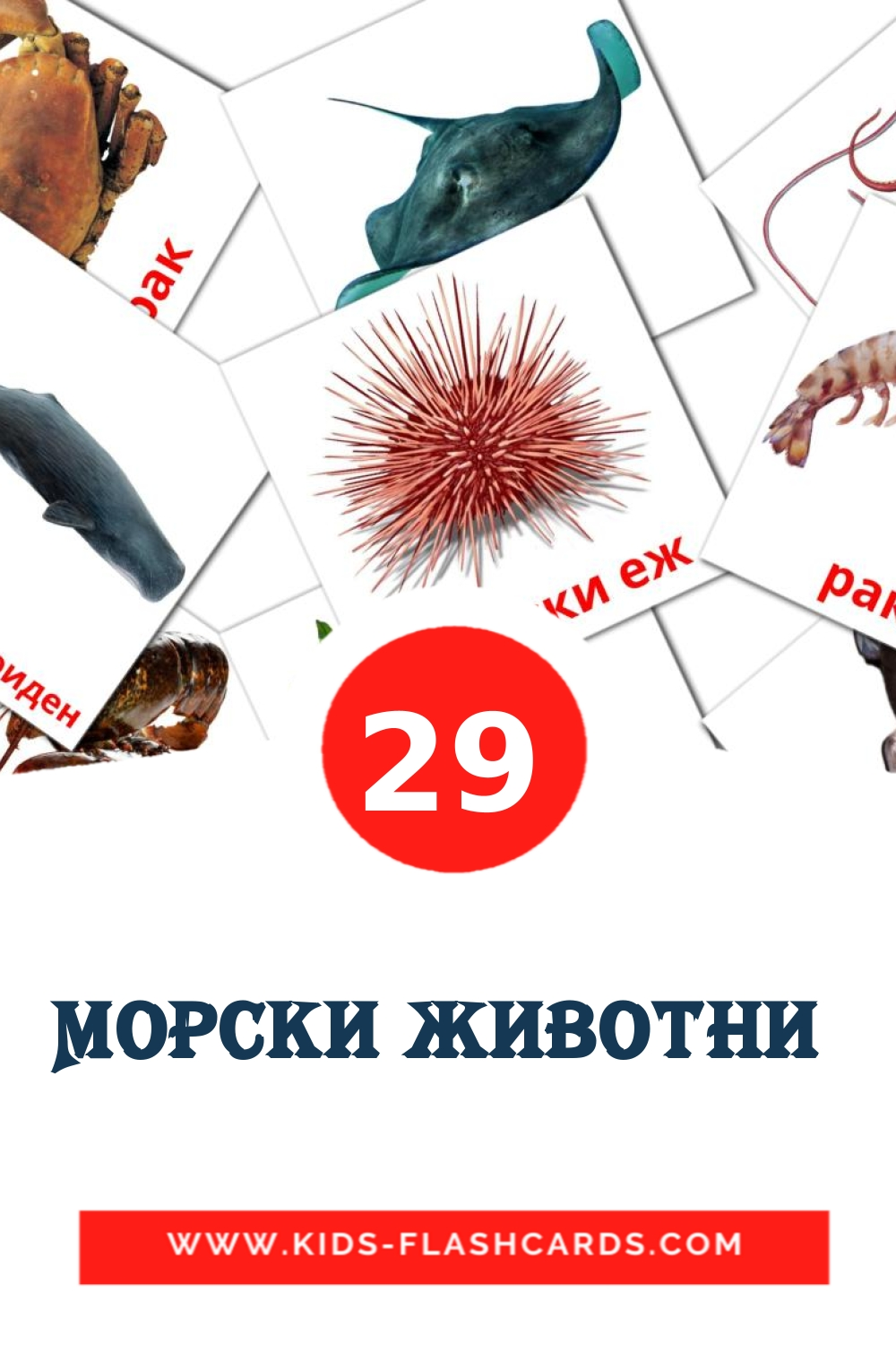 29 Морски животни  Picture Cards for Kindergarden in macedonian