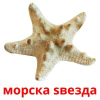 морска ѕвезда picture flashcards