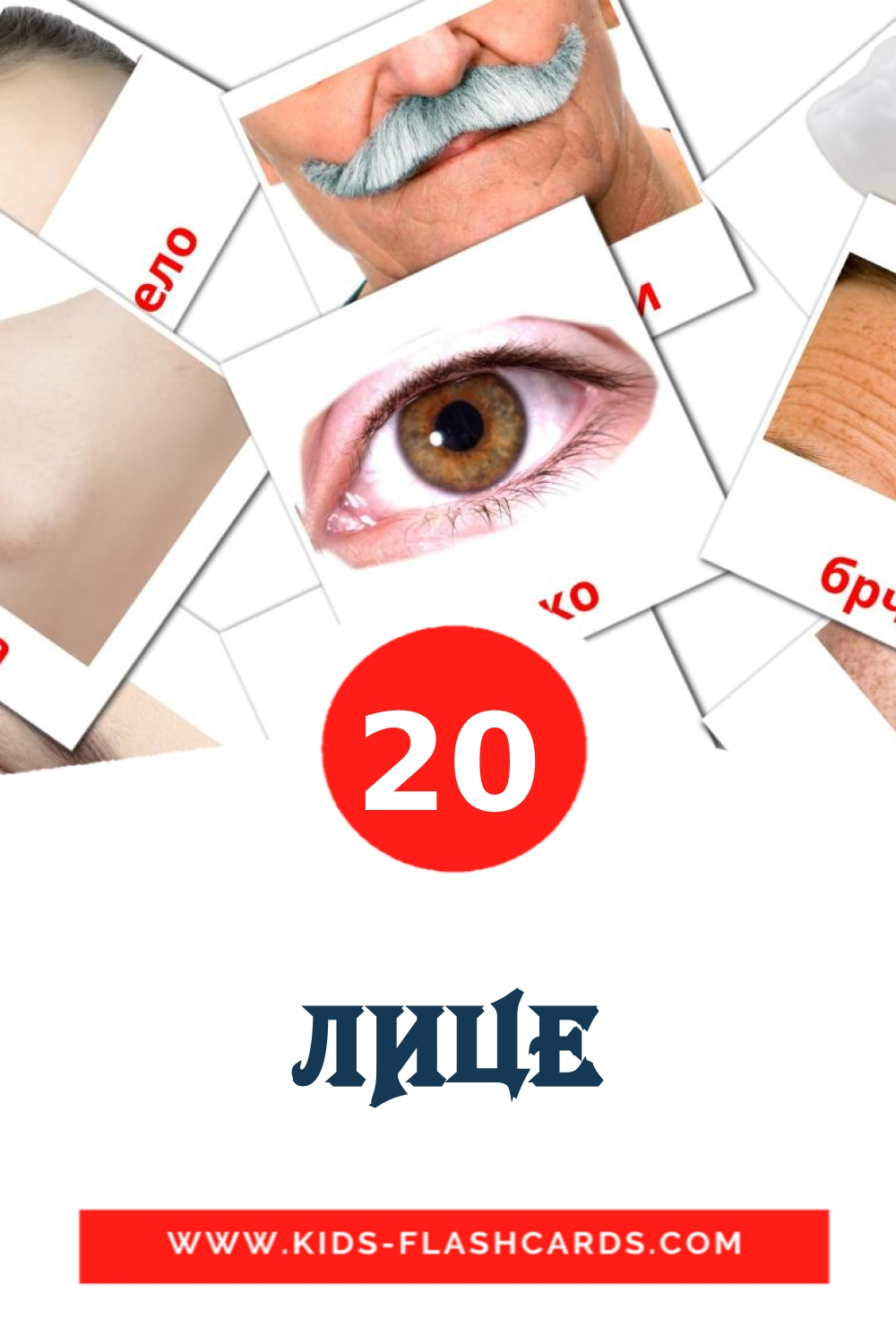 20 ЛИЦЕ Picture Cards for Kindergarden in macedonian