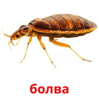 болва picture flashcards