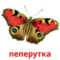 пеперутка picture flashcards