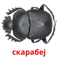 скарабеј picture flashcards