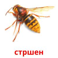 стршен picture flashcards