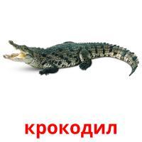 крокодил picture flashcards