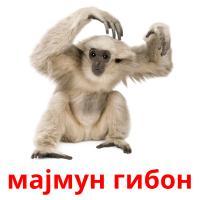 мајмун гибон picture flashcards