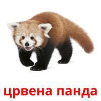 црвена панда picture flashcards