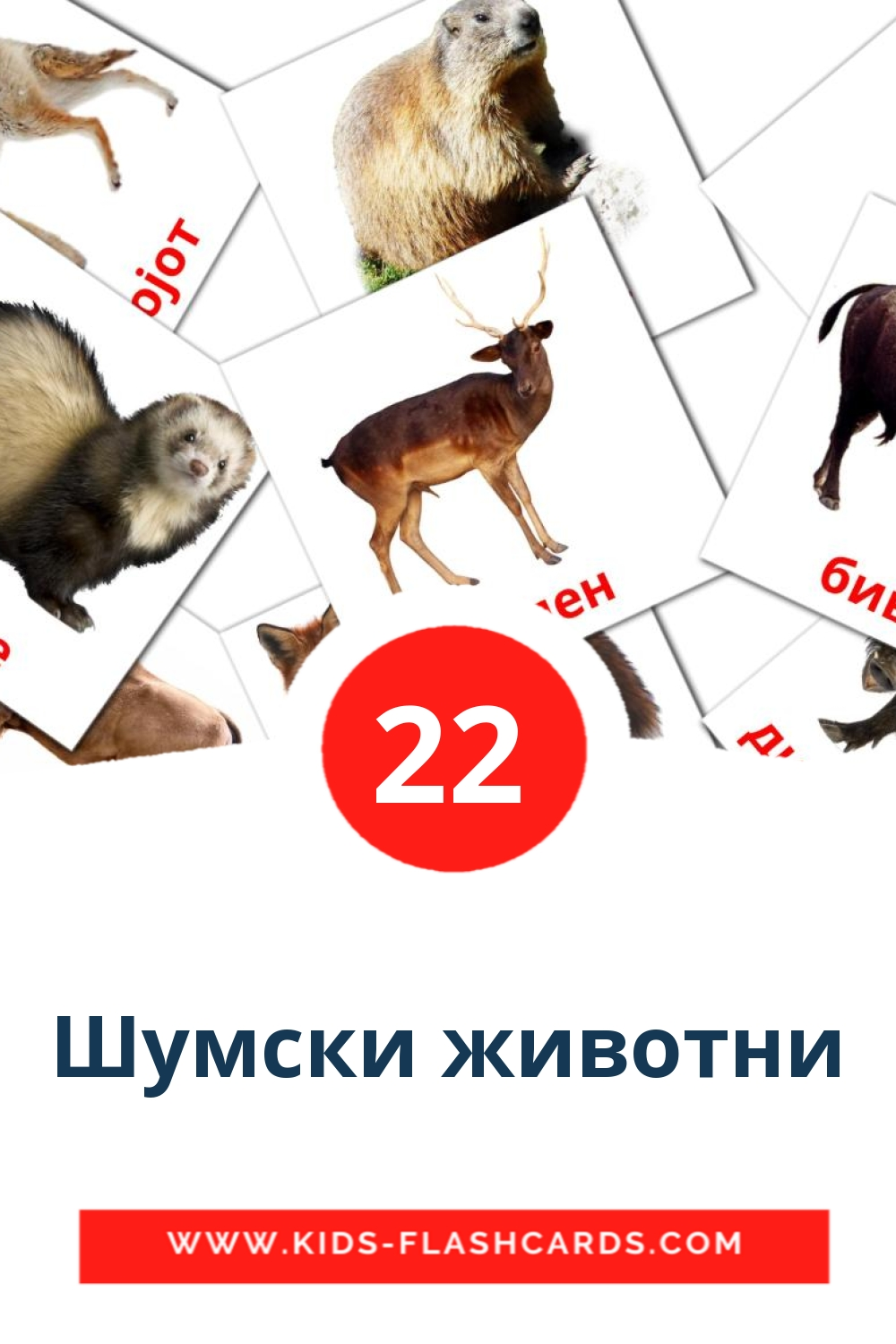 22 Шумски животни Picture Cards for Kindergarden in macedonian