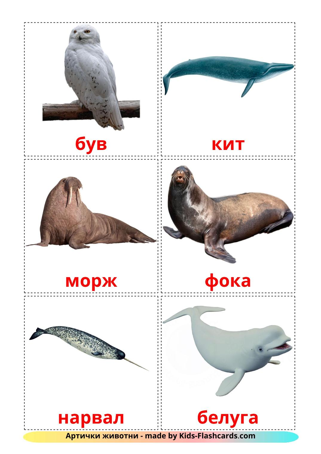 Arctic animals - 14 Free Printable macedonian Flashcards
