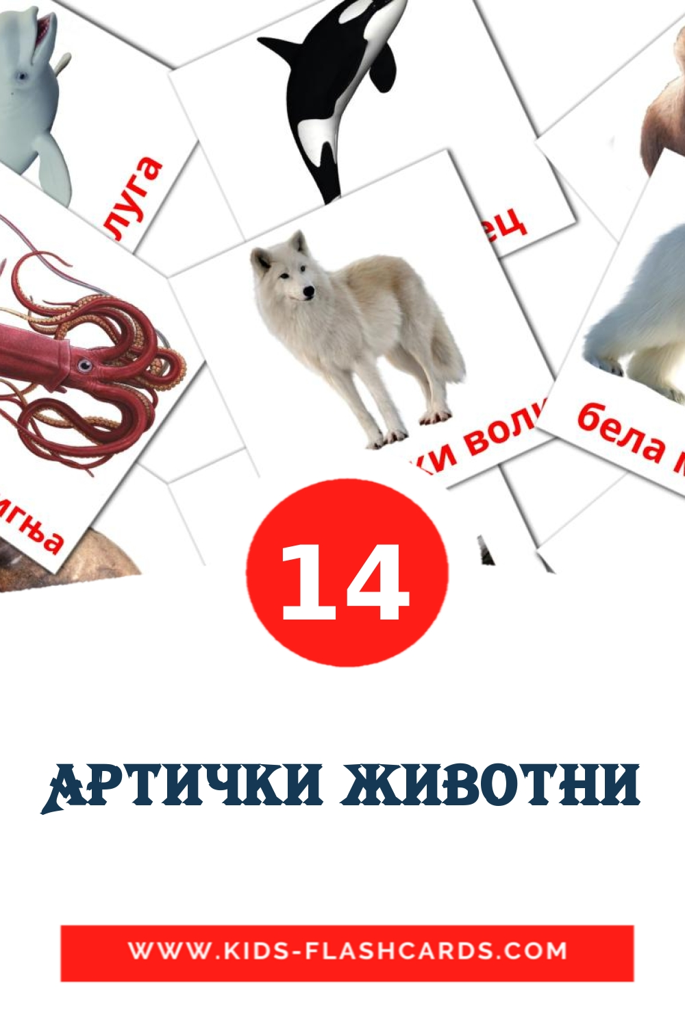 14 Артички животни Picture Cards for Kindergarden in macedonian