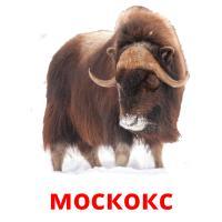 москокс picture flashcards