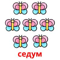 седум picture flashcards