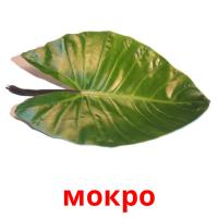 мокро picture flashcards